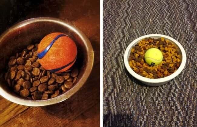 μπολ φαγητου σκυλου