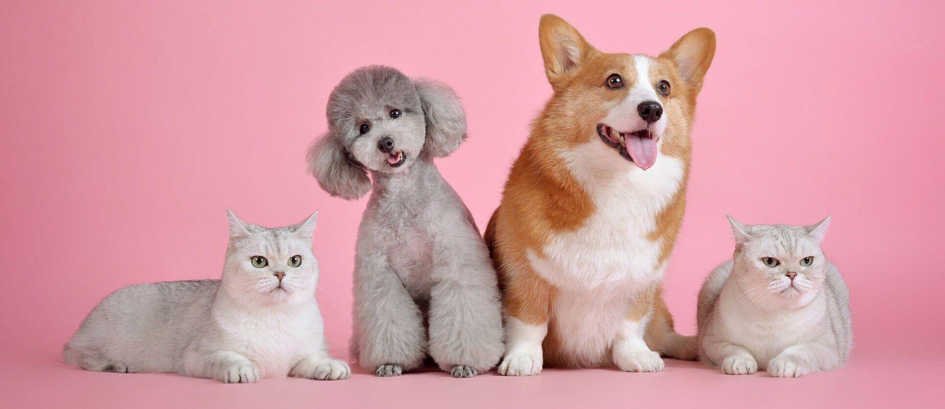 pet shop περιστέρι αττικής